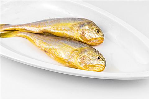 黄花鱼怎么选购