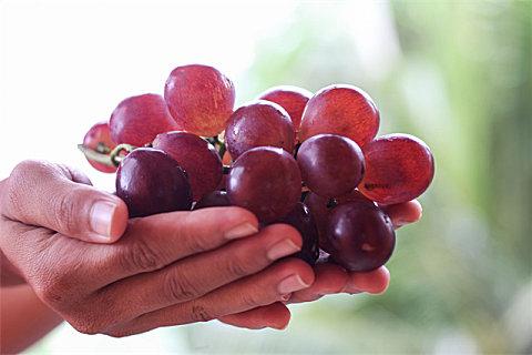 吃葡萄可以吃葡萄皮吗