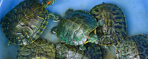 乌龟主要吃什么