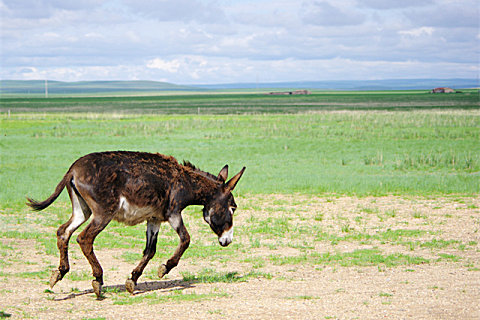 新鲜驴肉怎么保存比较好