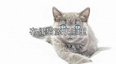 布偶猫源于哪里