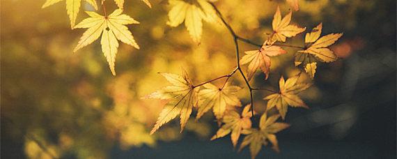 为什么有的树叶像手掌