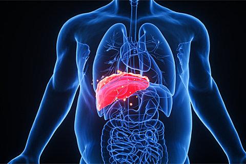 脂肪肝能不能吃海鲜