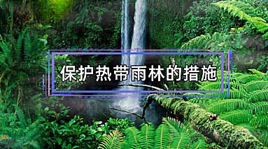 保护热带雨林的措施