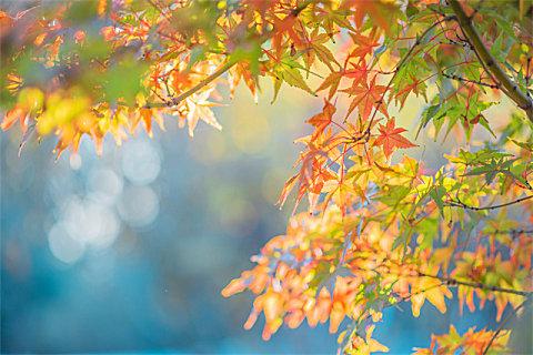 秋季常见的过敏性疾病