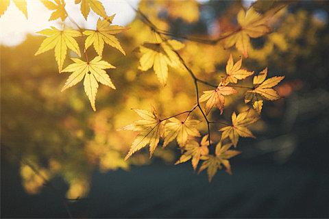 秋天为什么会湿气重