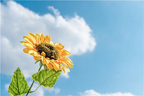 老年人晒太阳有什么好处?夏季适不适合晒太阳?