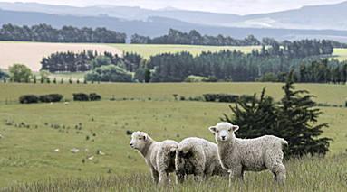 绵羊之国是指哪个国家