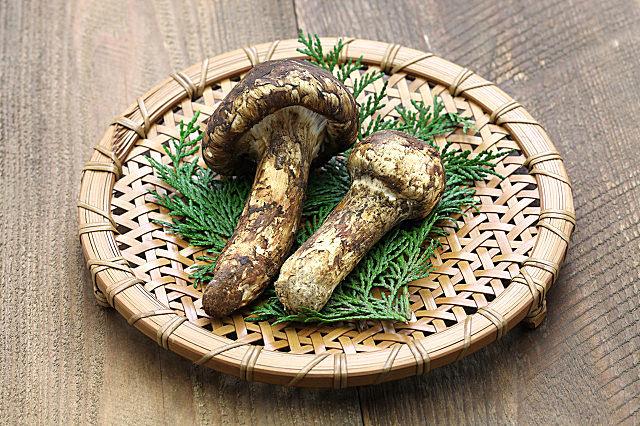 干松茸怎么吃最好吃?这些吃法强烈推荐!