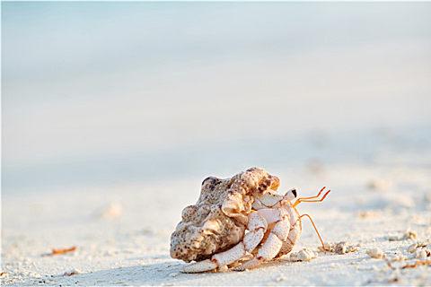 寄居蟹和海葵是什么关系