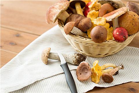 牛肝菌和松茸菌可以一起吃吗
