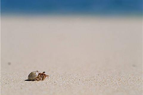 寄居蟹能不能吃