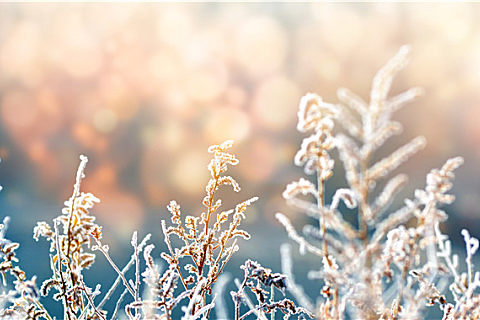 大寒有哪些谚语农谚?大寒谚语汇总解析