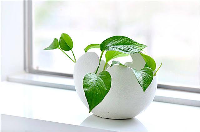 睡觉房间放什么植物好