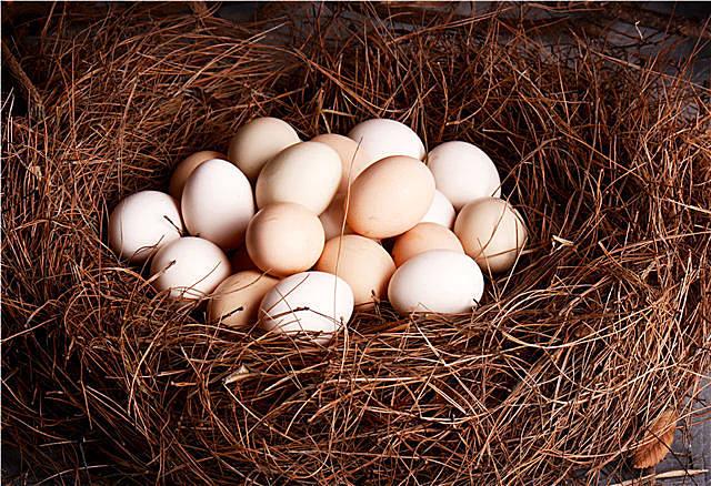 鸽子蛋和鸡蛋哪个更好