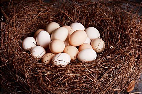 鸽子蛋滋补营养,鸽子蛋和鸡蛋哪个更好?