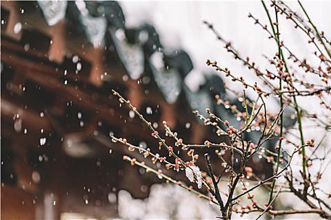 小寒节气的祝福短信,愿大家快乐过小寒
