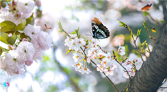 春天有哪些养生美食