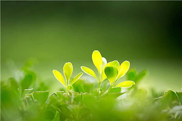 优美简短的立春祝福语,了解一下
