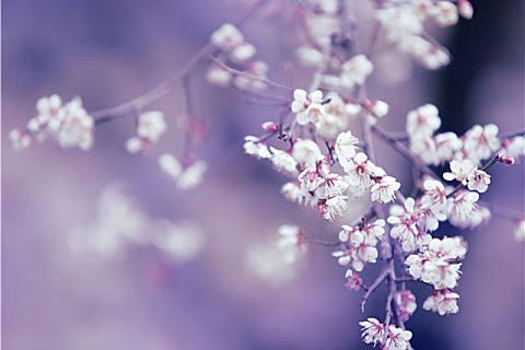 立春有什么传统风俗