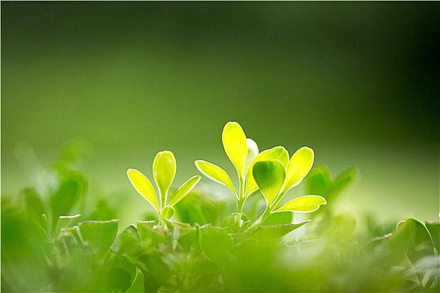 春季女性养生排毒吃什么?春季养生保健技巧