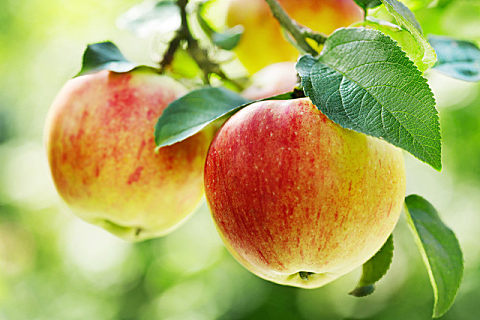 女人睡前吃苹果好吗?这些禁忌要早知道!