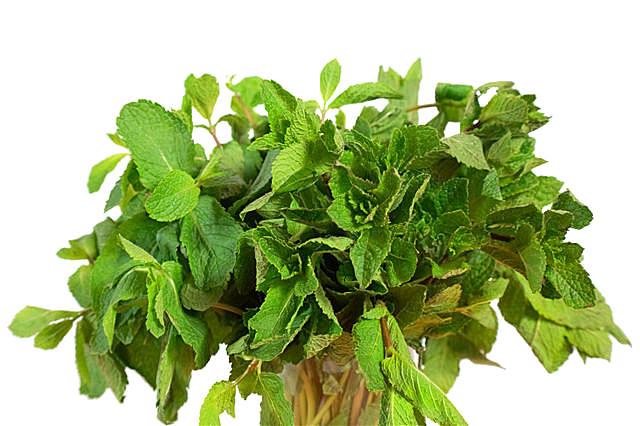 水芹菜是不是芹菜