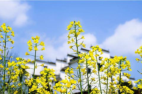 春季养生要注意什么日常禁忌?春季养生要了解这些