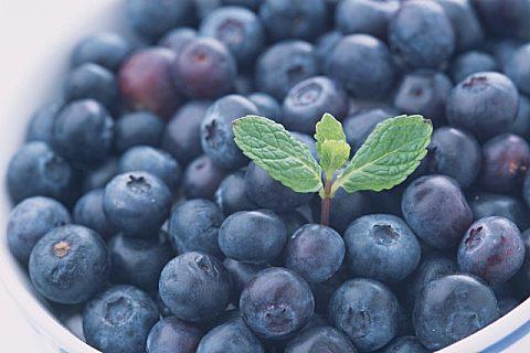 蓝莓能直接种吗?后期管理很重要!