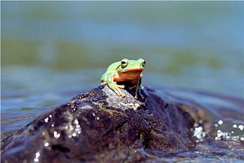 活的林蛙怎么保存时间长
