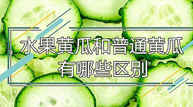 水果黄瓜和普通黄瓜有哪些区别