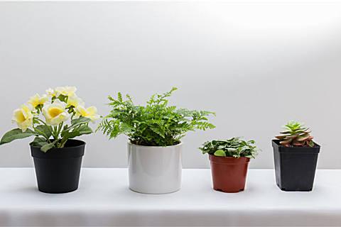 家里适合养什么花草?家里养花要注意什么?