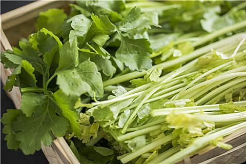 水芹菜营养美味,初春就应该吃这种营养野菜