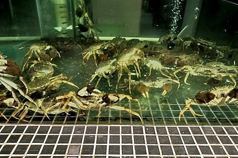 螃蟹买回来怕死怎么办