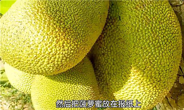 菠萝蜜怎么剥