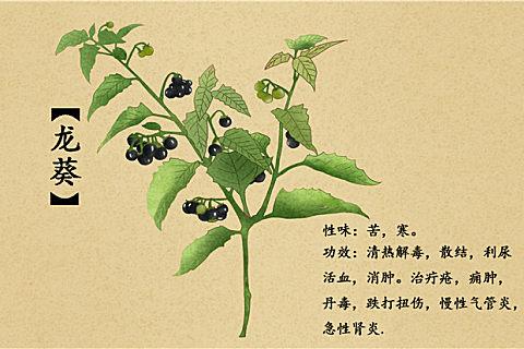 龙葵和黑枸杞的区别 吃龙葵的功效好处这么多你还没吃过?