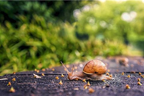 可食用蜗牛的营养价值