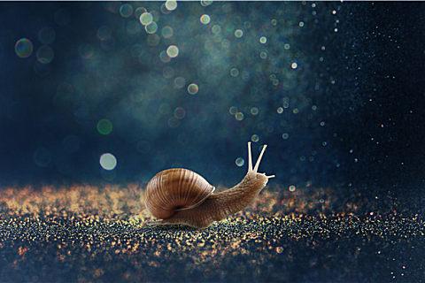 蜗牛的食用禁忌