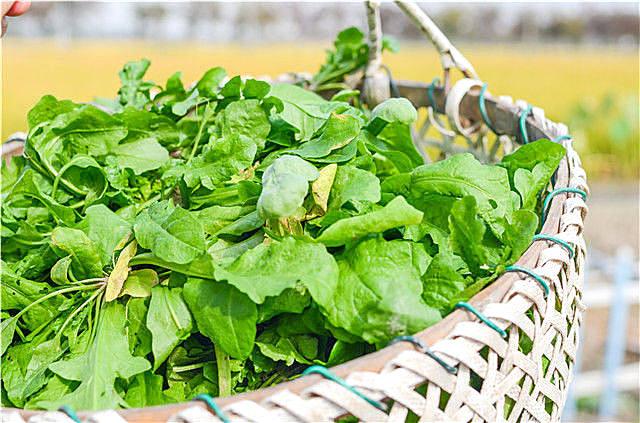 春季养生吃什么野菜?四种野菜胜过补品