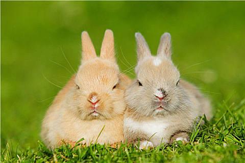 兔子可以喝水吗?这些动物竟然不用喝水,好神奇