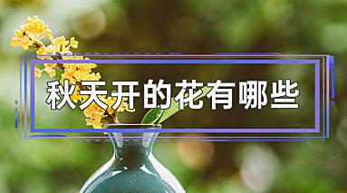 秋天开的花有哪些
