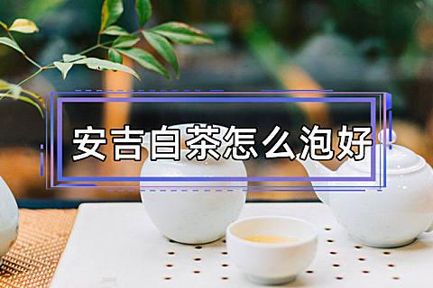 安吉白茶怎么泡好