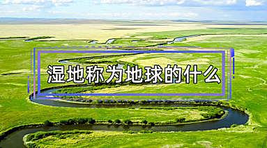 湿地称为地球的什么