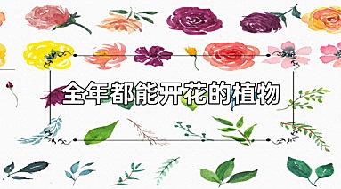 全年都能开花的植物